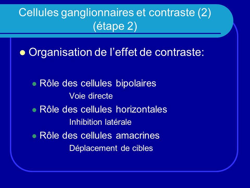Cellules ganglionnaires et contraste (2) (étape 2)