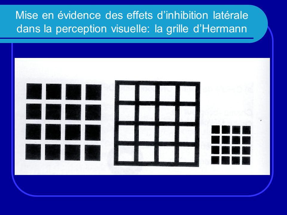 Mise en évidence des effets d'inhibition latérale dans la perception visuelle: la grille d'Hermann