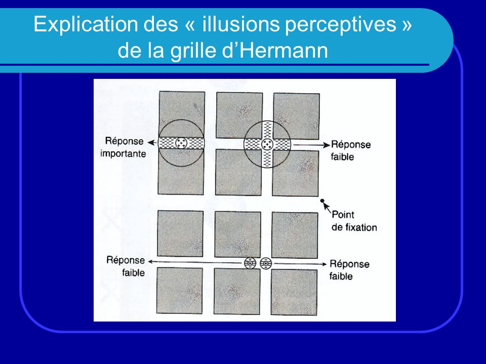 Explication des « illusions perceptives » de la grille d'Hermann