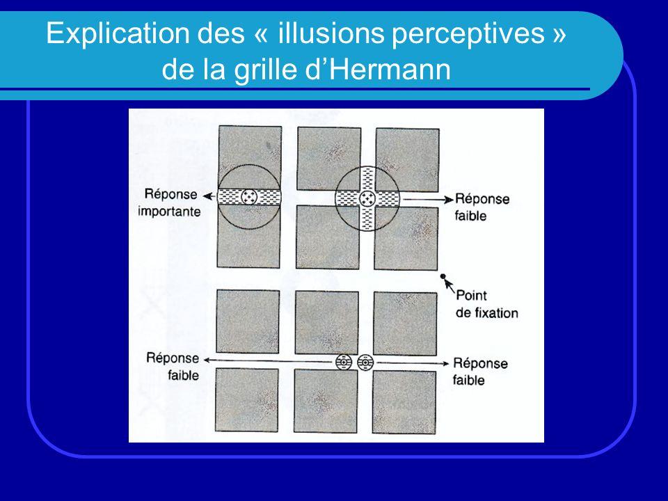 Explication des « illusions perceptives » de la grille d'Hermann