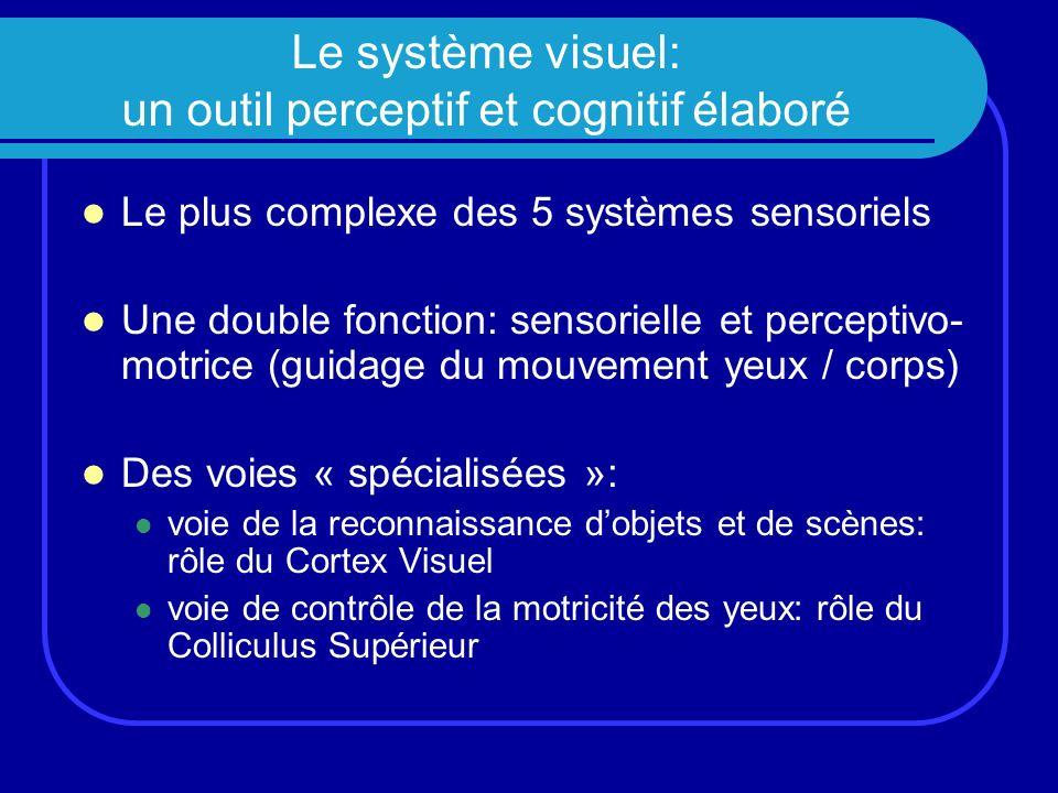 Le système visuel: un outil perceptif et cognitif élaboré