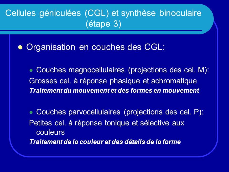 Cellules géniculées (CGL) et synthèse binoculaire (étape 3)