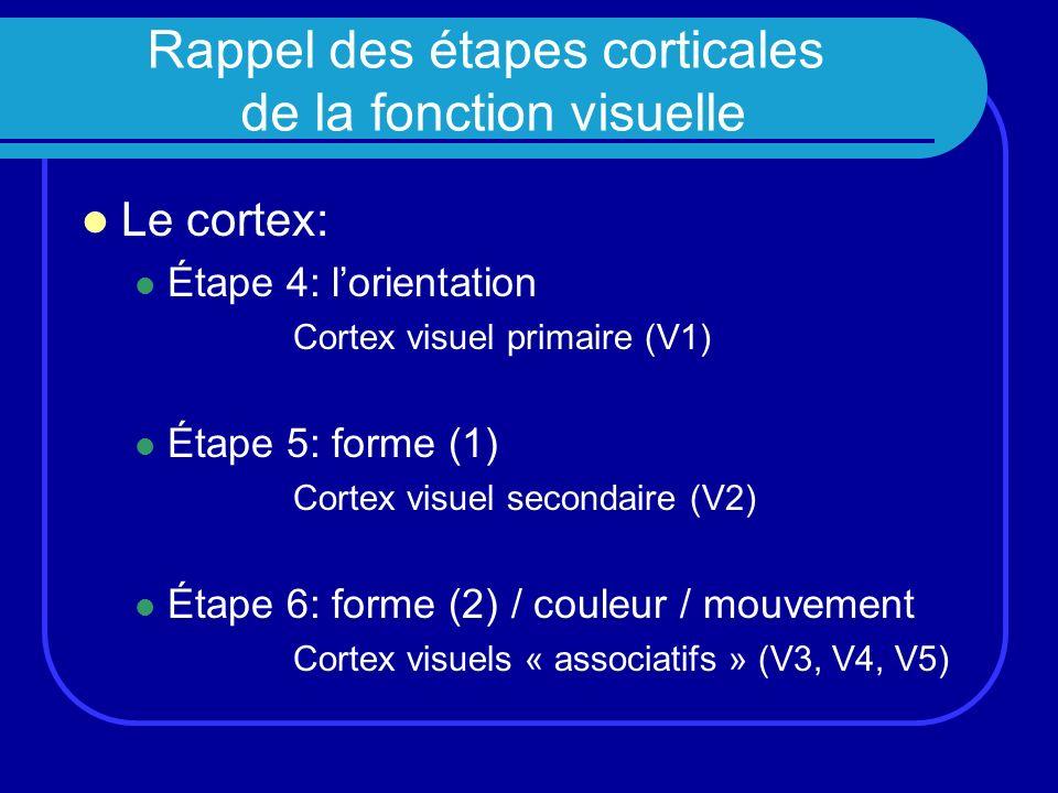 Rappel des étapes corticales de la fonction visuelle