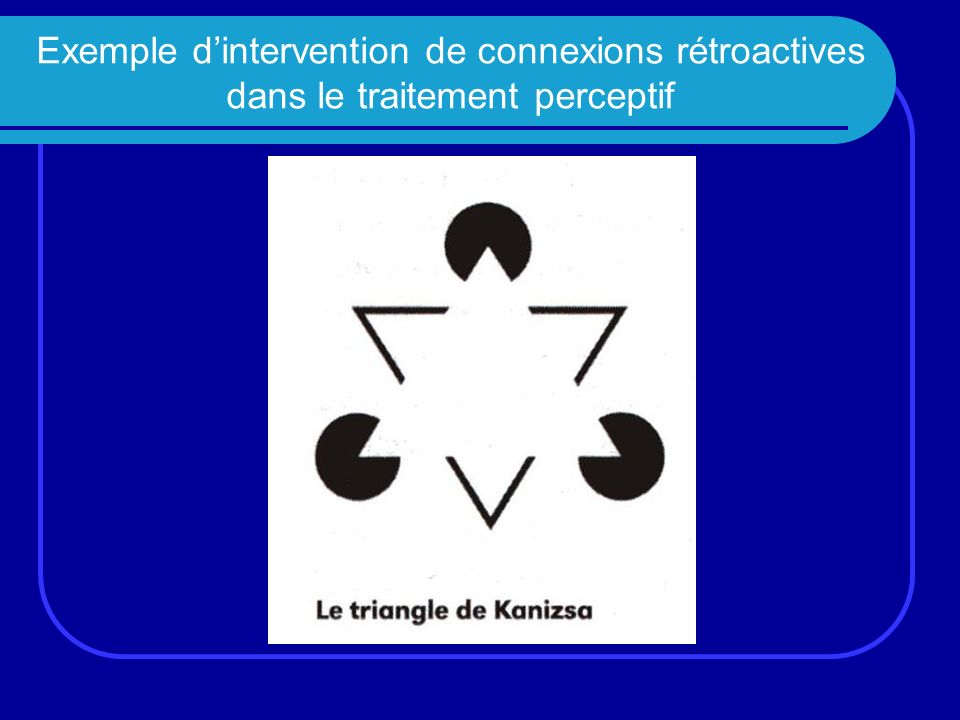 Exemple d'intervention de connexions rétroactives dans le traitement perceptif