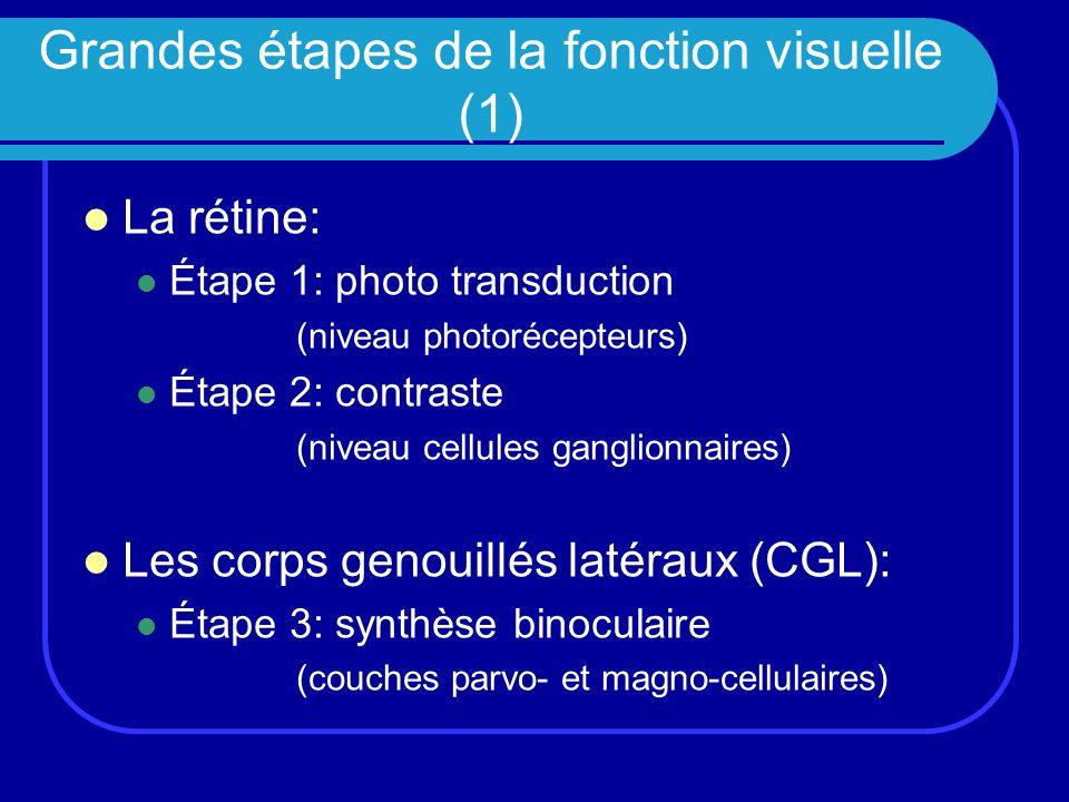 Grandes étapes de la fonction visuelle (1)