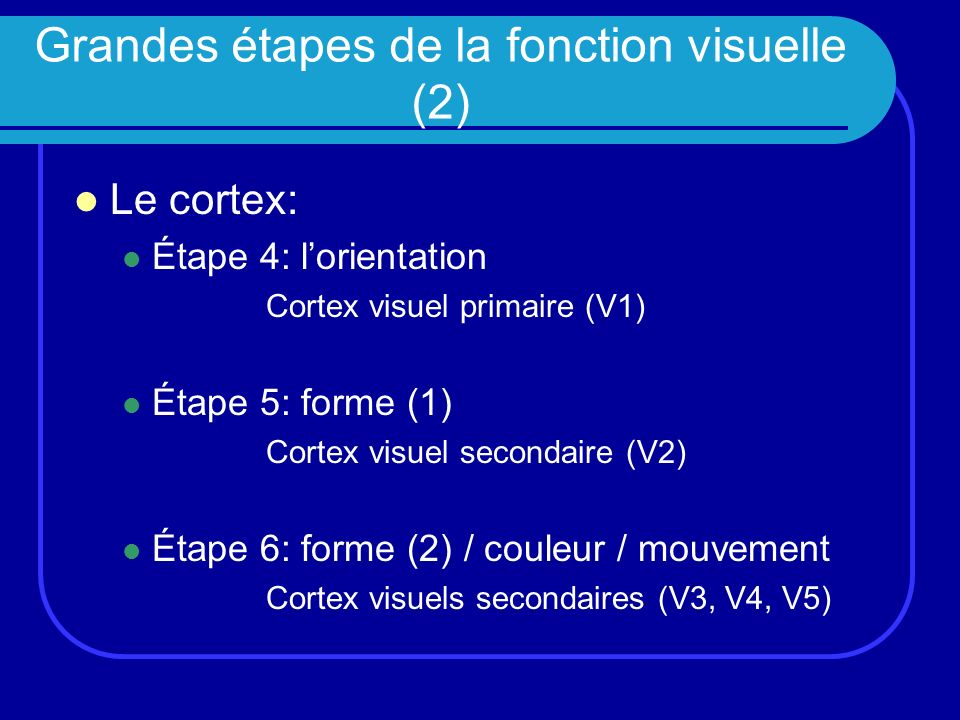 Grandes étapes de la fonction visuelle (2)