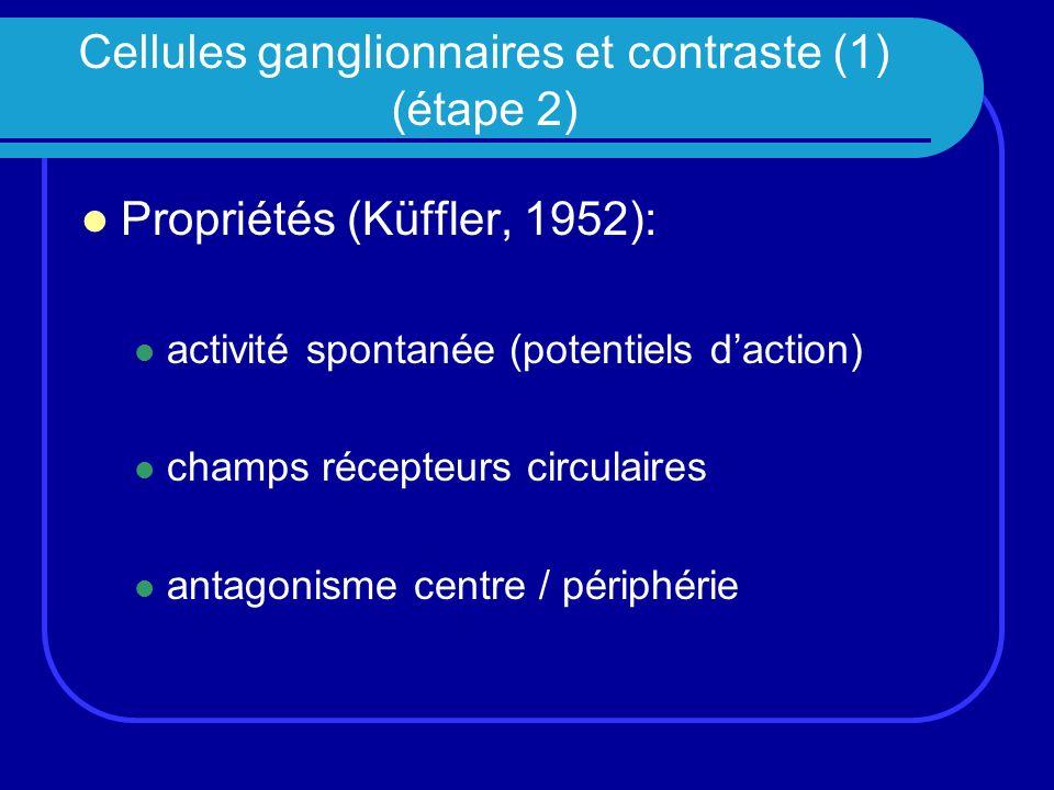 Cellules ganglionnaires et contraste (1) (étape 2)