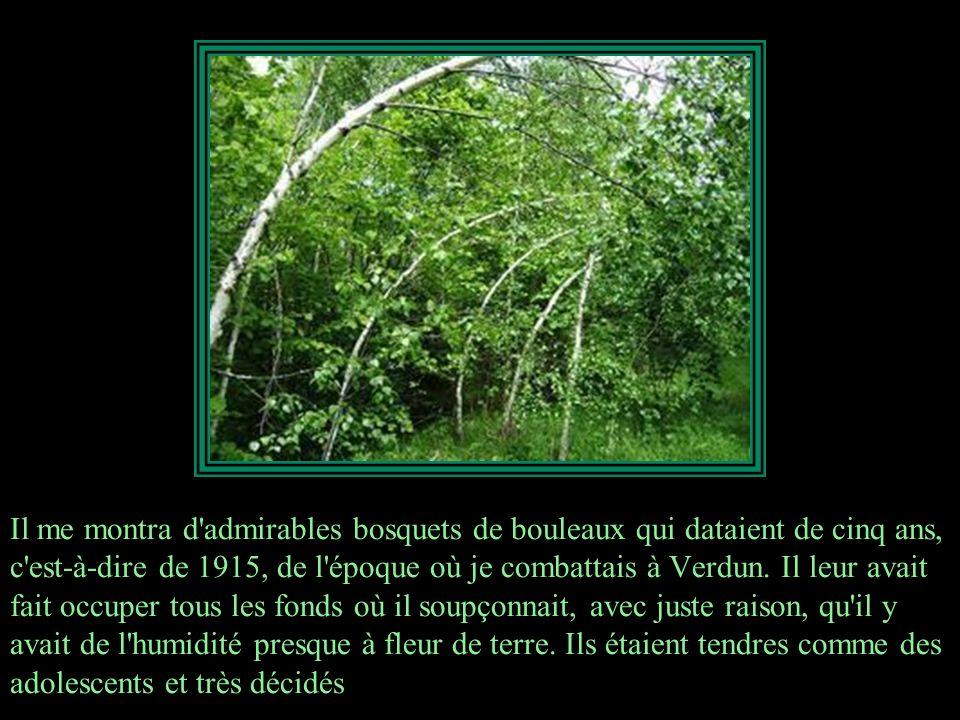 Il me montra d admirables bosquets de bouleaux qui dataient de cinq ans, c est-à-dire de 1915, de l époque où je combattais à Verdun.