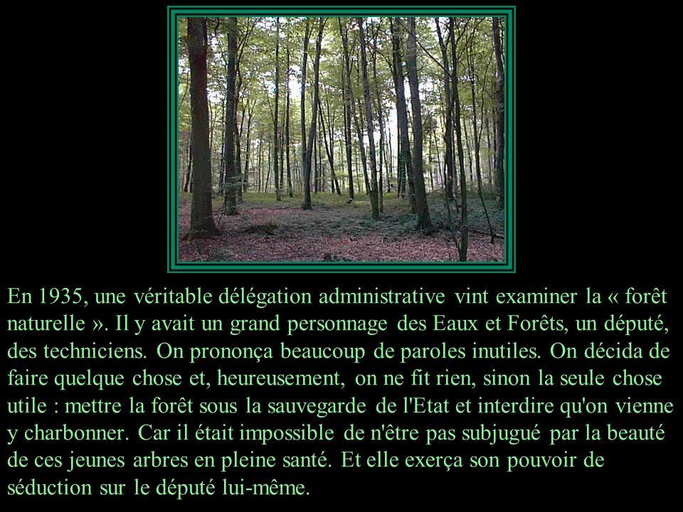 En 1935, une véritable délégation administrative vint examiner la « forêt naturelle ».