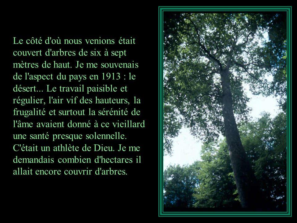 Le côté d où nous venions était couvert d arbres de six à sept mètres de haut.