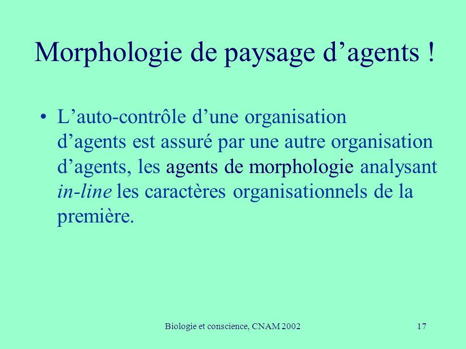 Morphologie de paysage d'agents !