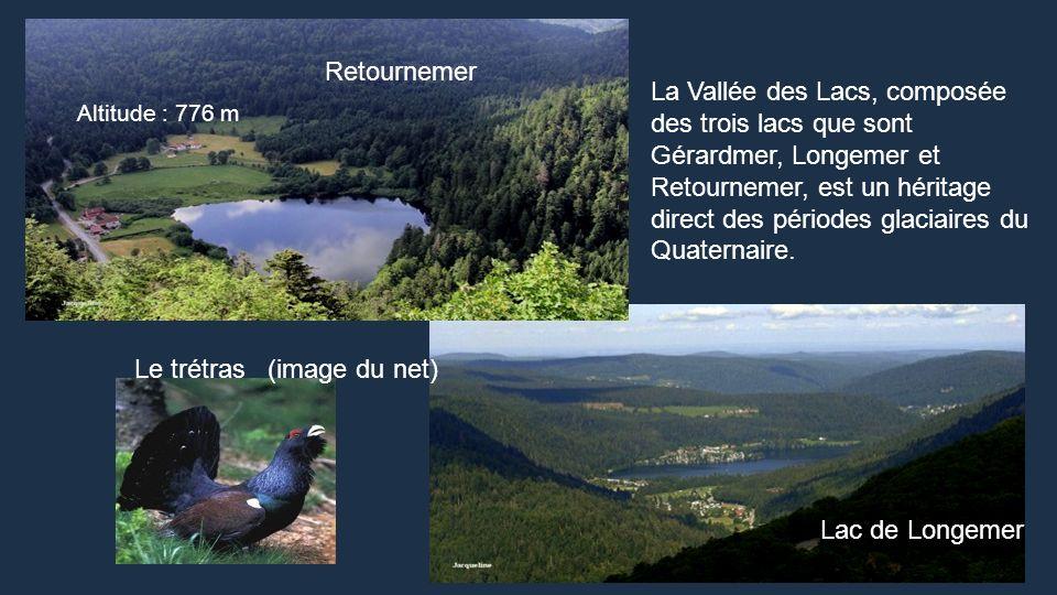 Le trétras (image du net)