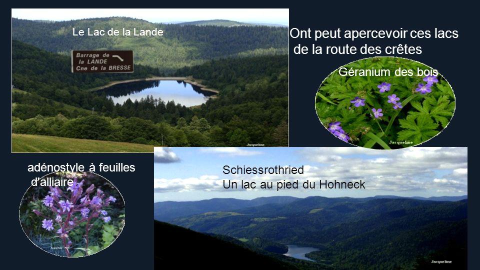 de la route des crêtes Ont peut apercevoir ces lacs Géranium des bois