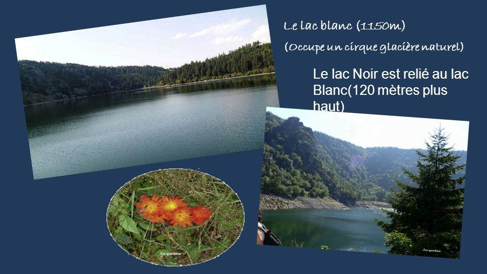 Le lac blanc (1150m) (Occupe un cirque glacière naturel)