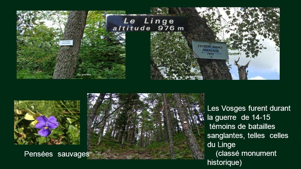 Les Vosges furent durant la guerre de 14-15