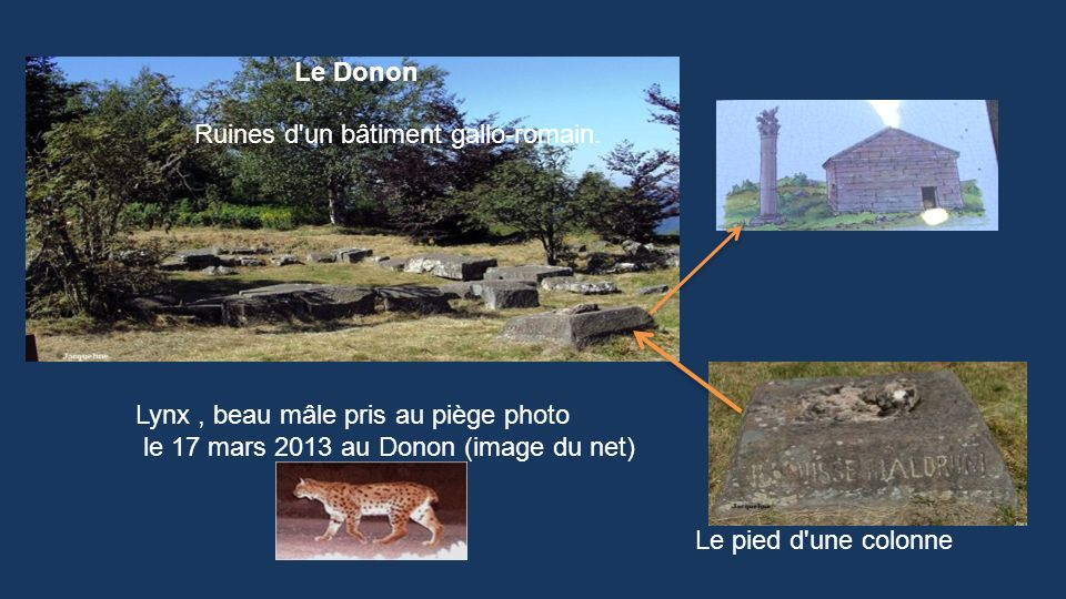 Le DononRuines d un bâtiment gallo-romain. Lynx , beau mâle pris au piège photo. le 17 mars 2013 au Donon (image du net)