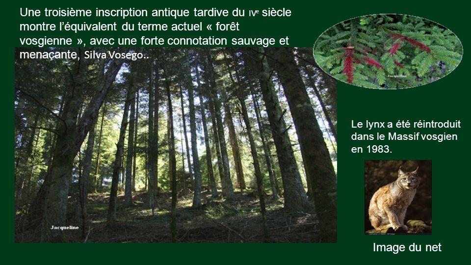 Une troisième inscription antique tardive du IVe siècle montre l'équivalent du terme actuel « forêt vosgienne », avec une forte connotation sauvage et menaçante, Silva Vosego..