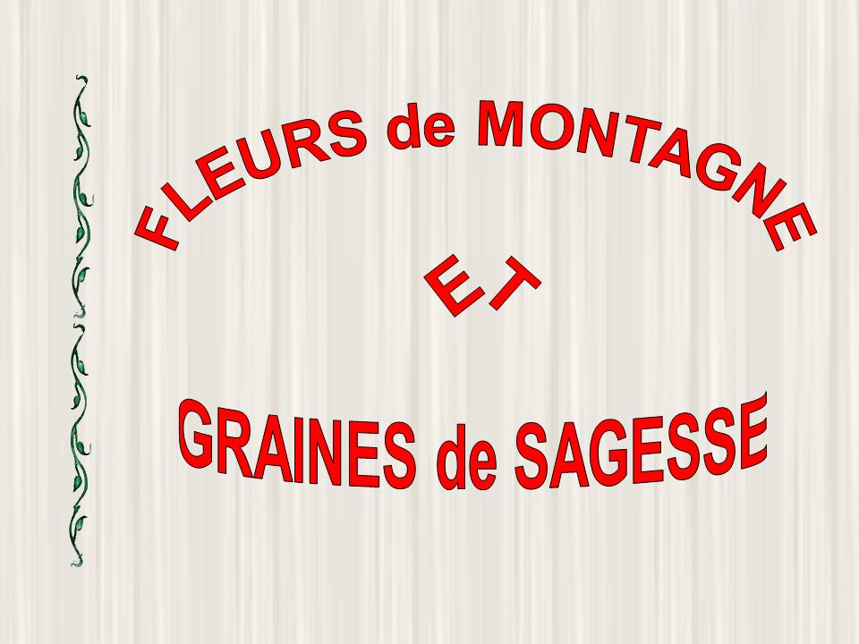 FLEURS de MONTAGNE ET GRAINES de SAGESSE
