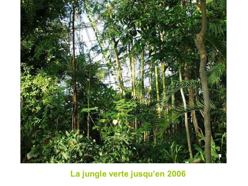 La jungle verte jusqu'en 2006