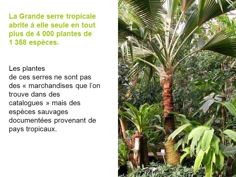 La Grande serre tropicale