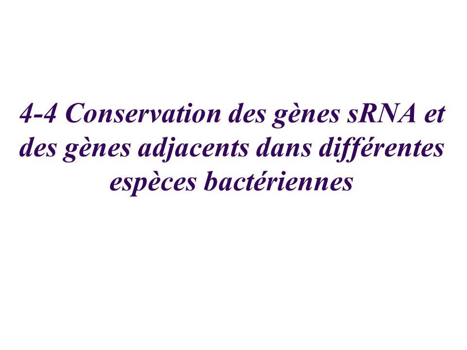 4-4 Conservation des gènes sRNA et des gènes adjacents dans différentes espèces bactériennes