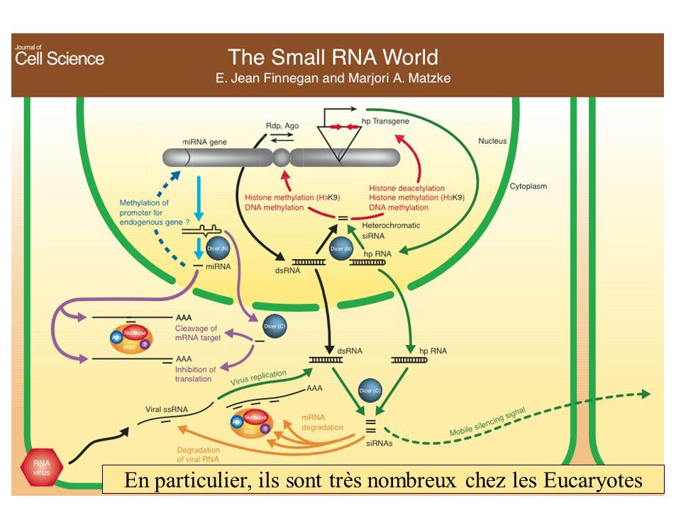 En particulier, ils sont très nombreux chez les Eucaryotes
