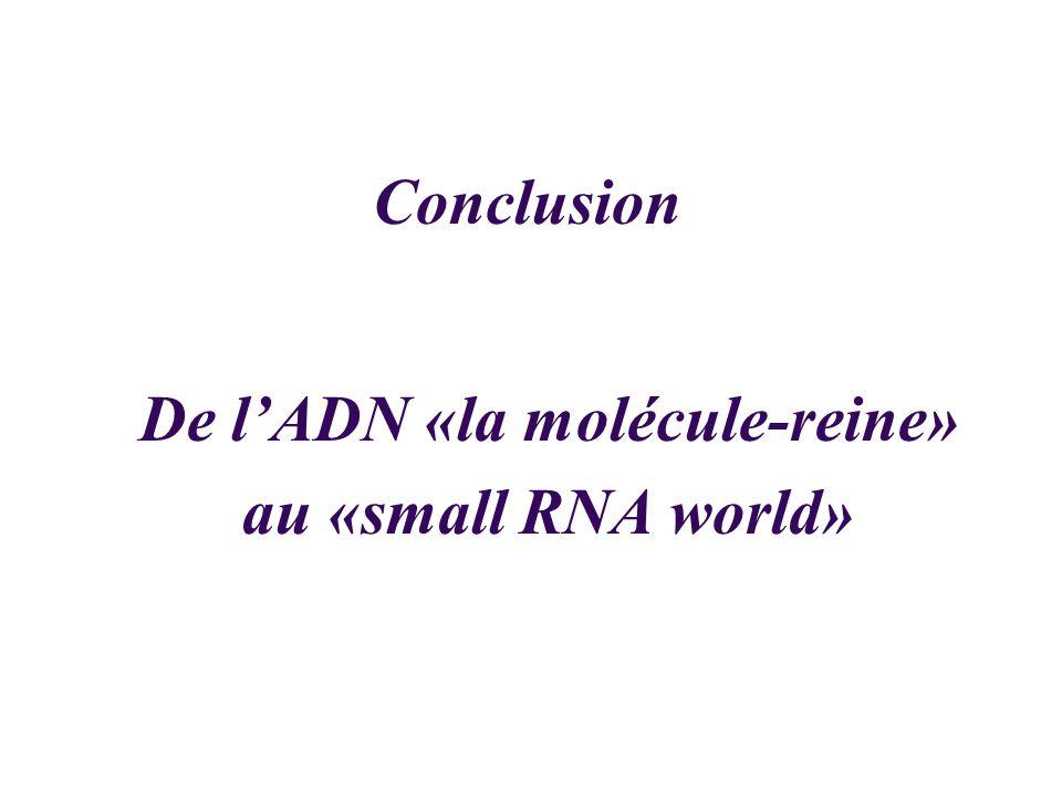 De l'ADN «la molécule-reine» au «small RNA world»