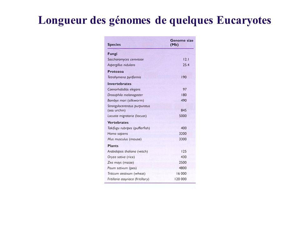 Longueur des génomes de quelques Eucaryotes