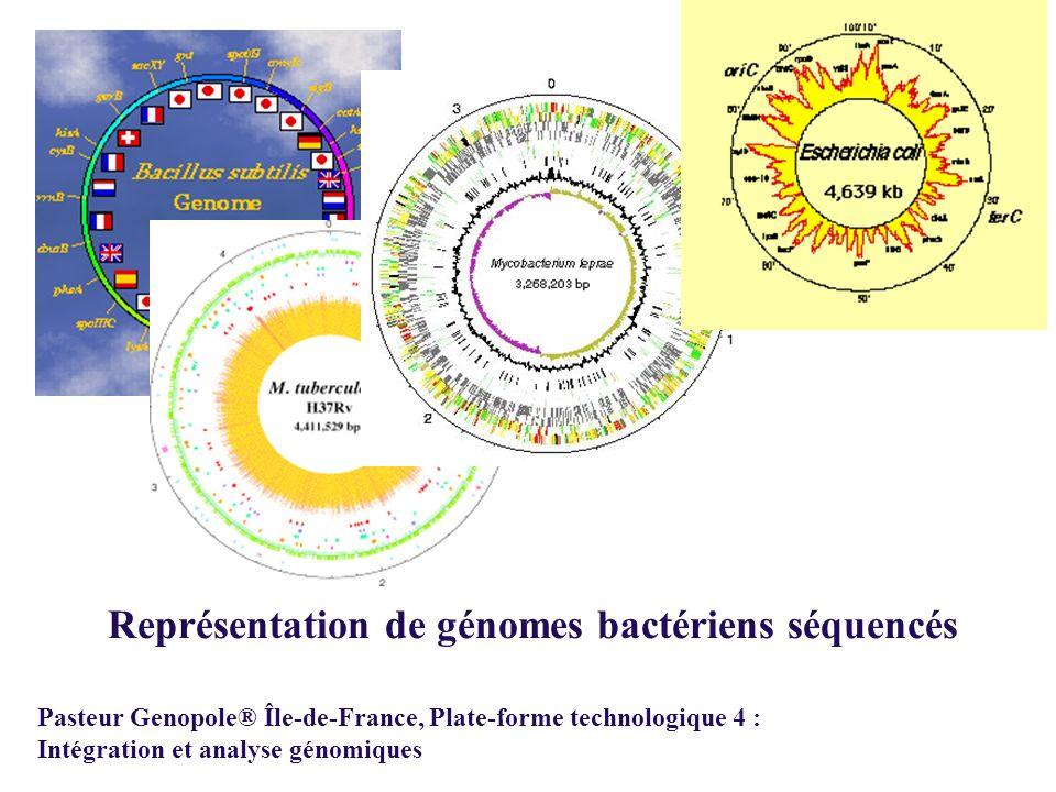 Représentation de génomes bactériens séquencés