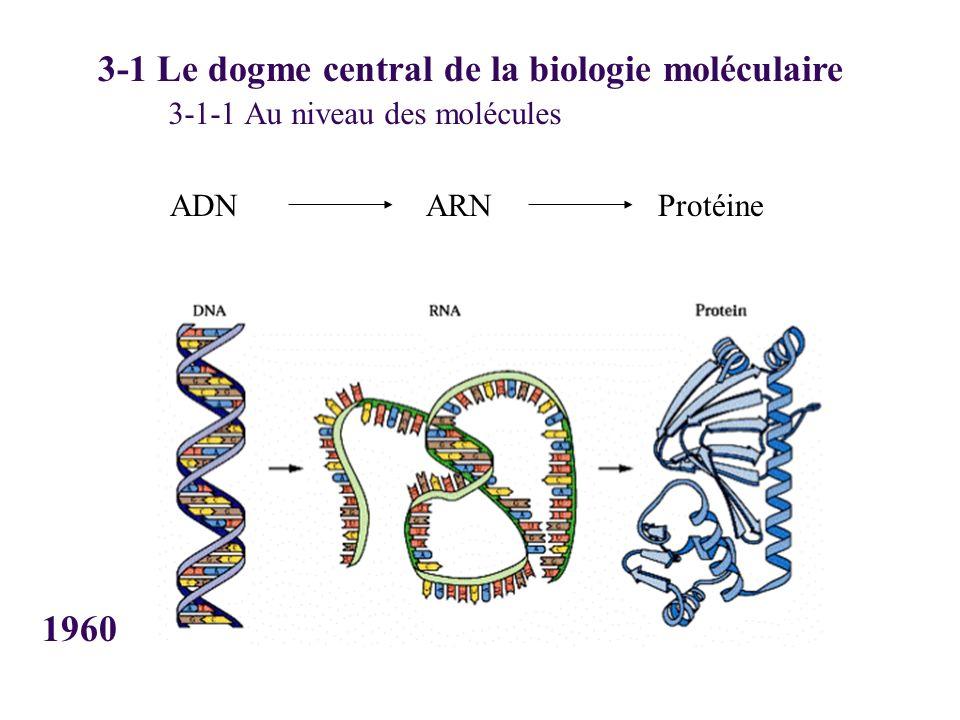 3-1 Le dogme central de la biologie moléculaire