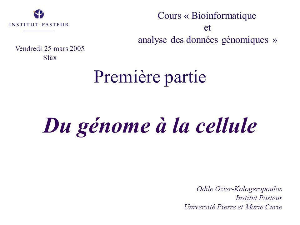 Première partie Du génome à la cellule