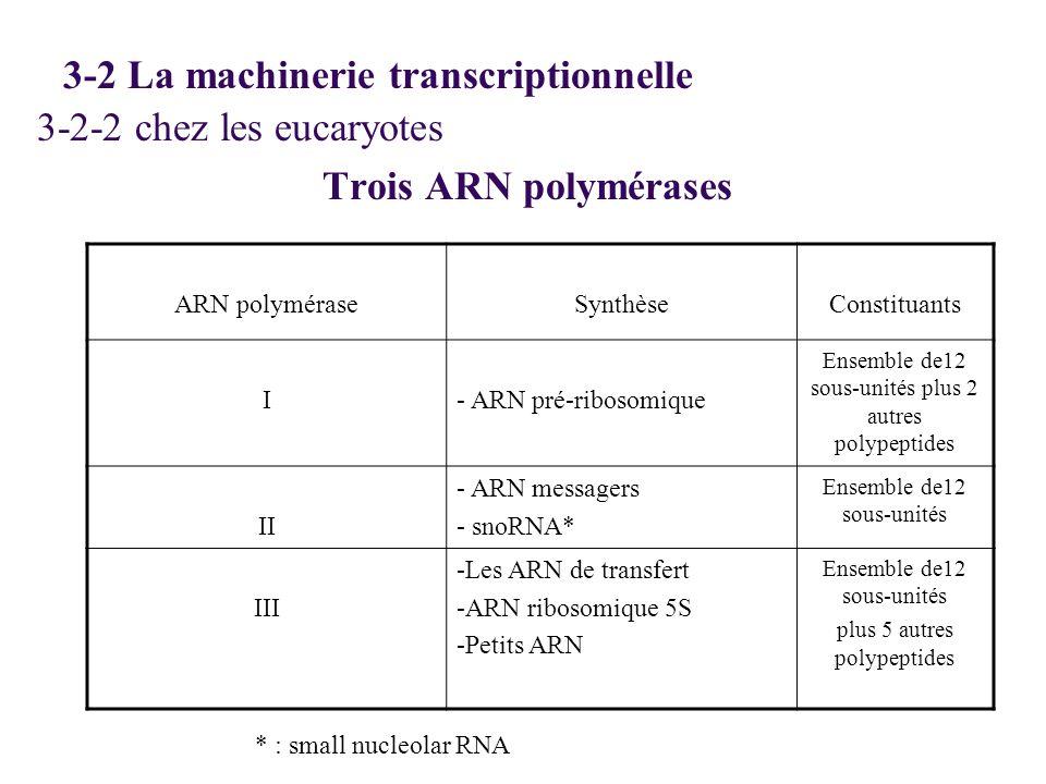 3-2-2 chez les eucaryotes Trois ARN polymérases