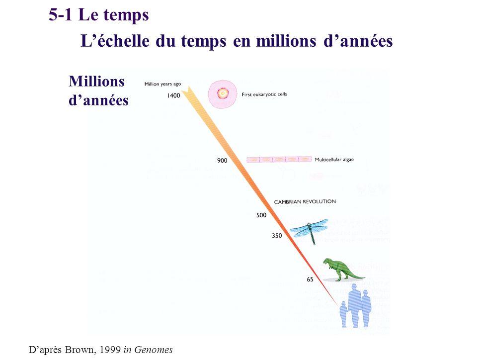 L'échelle du temps en millions d'années