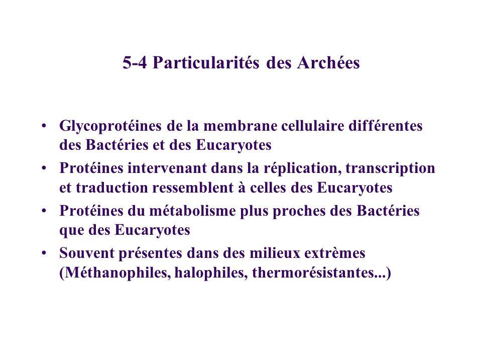 5-4 Particularités des Archées