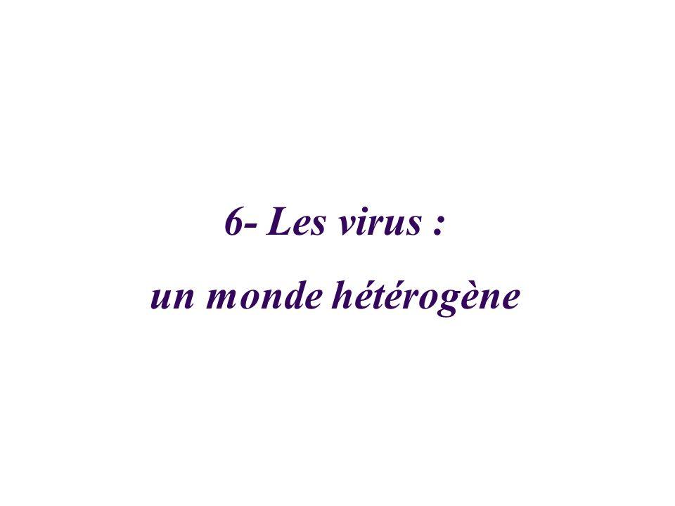 6- Les virus : un monde hétérogène