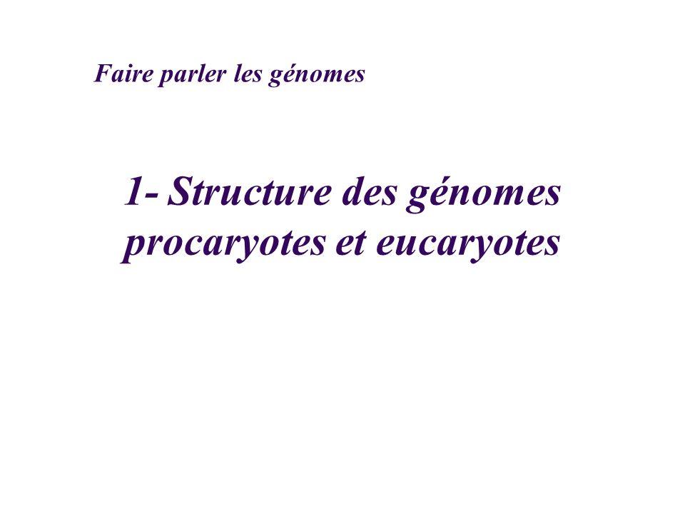 1- Structure des génomes procaryotes et eucaryotes