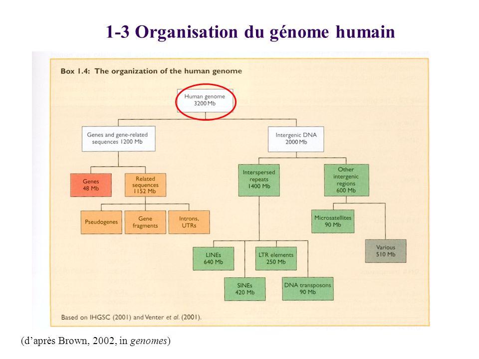 1-3 Organisation du génome humain