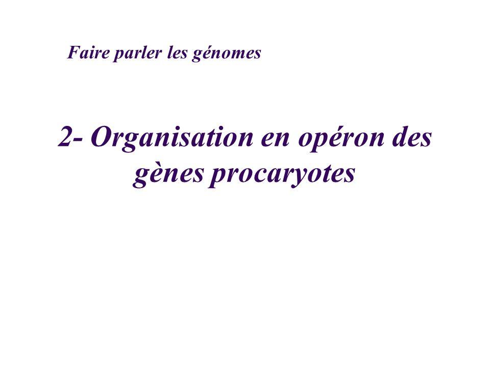2- Organisation en opéron des gènes procaryotes