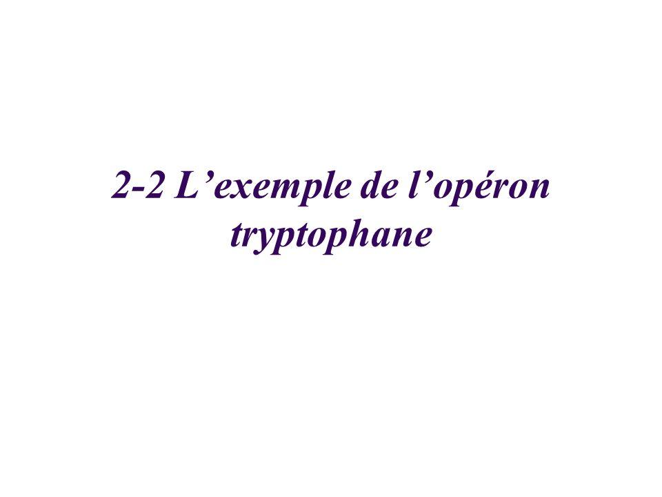 2-2 L'exemple de l'opéron tryptophane
