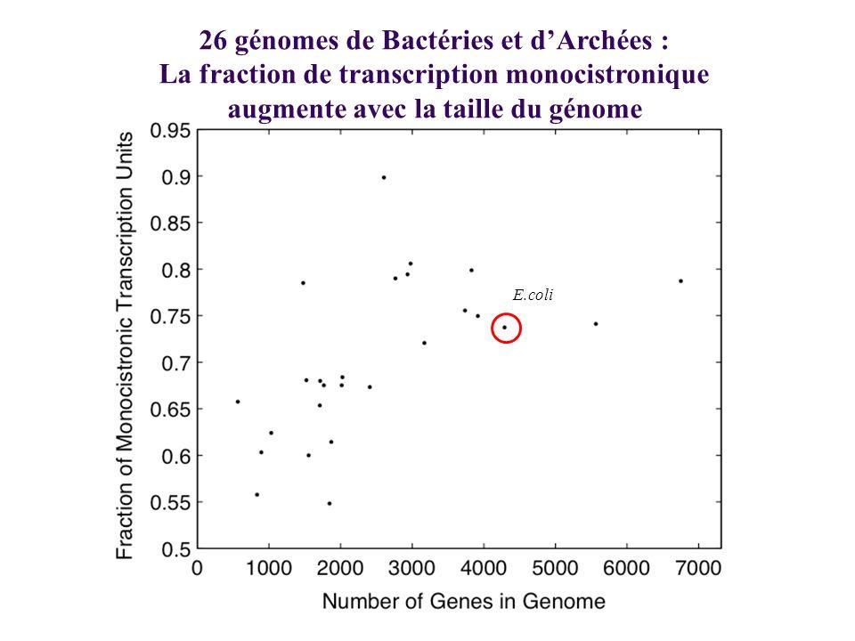 26 génomes de Bactéries et d'Archées :