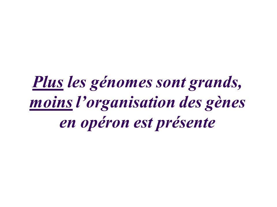 Plus les génomes sont grands, moins l'organisation des gènes en opéron est présente