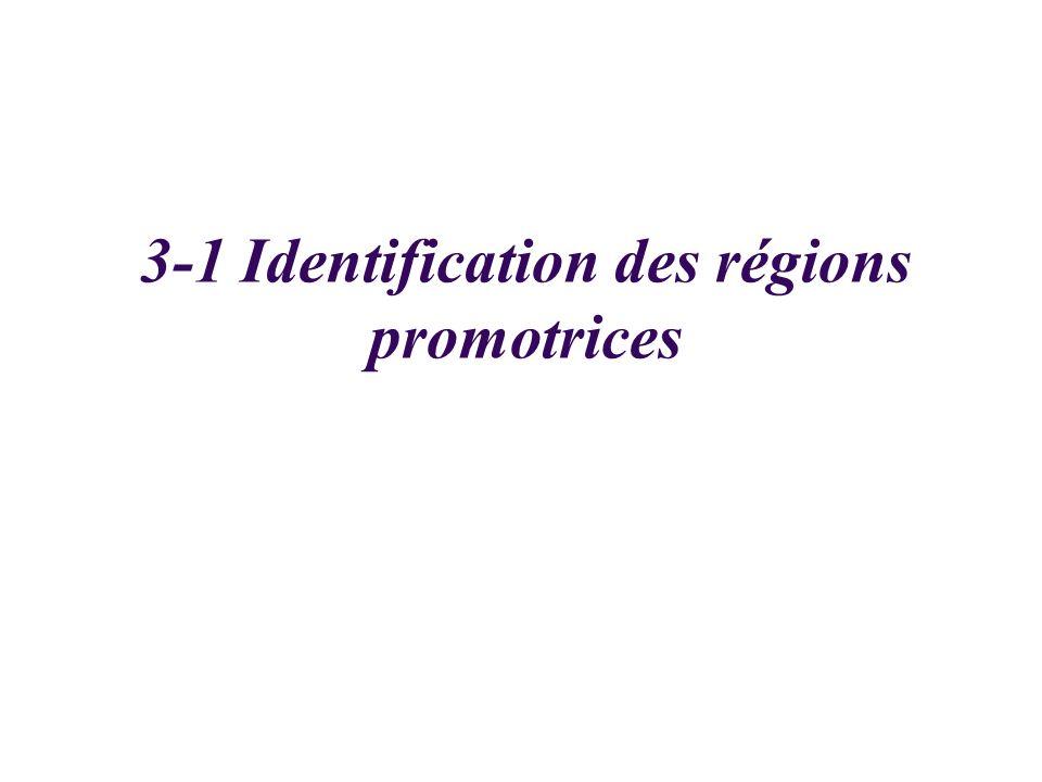 3-1 Identification des régions promotrices