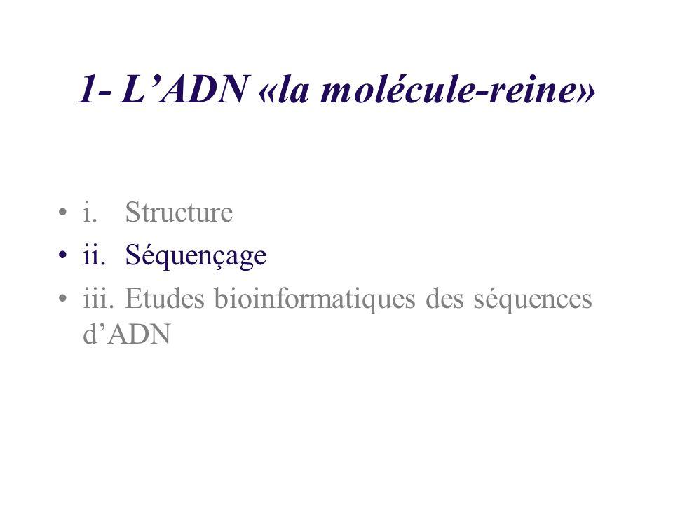 1- L'ADN «la molécule-reine»