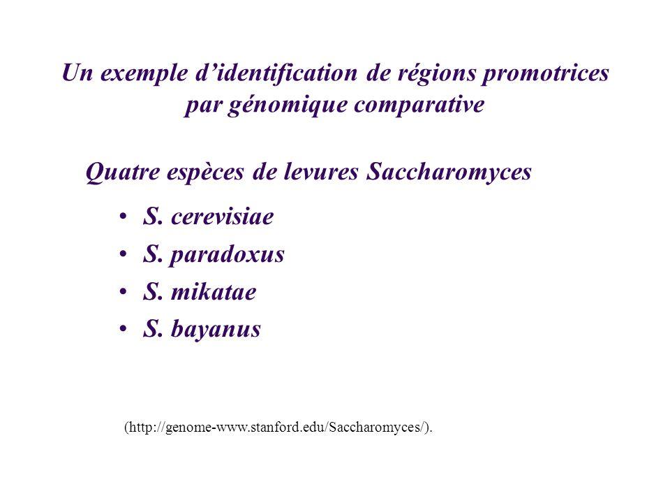 Quatre espèces de levures Saccharomyces