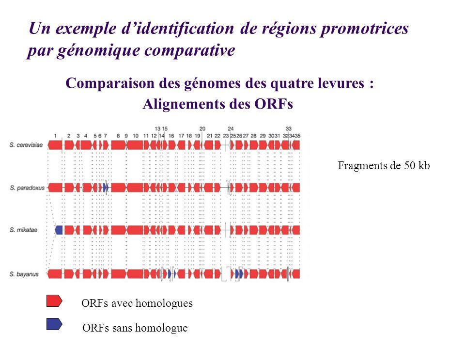 Comparaison des génomes des quatre levures :