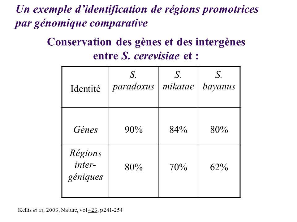 Conservation des gènes et des intergènes entre S. cerevisiae et :