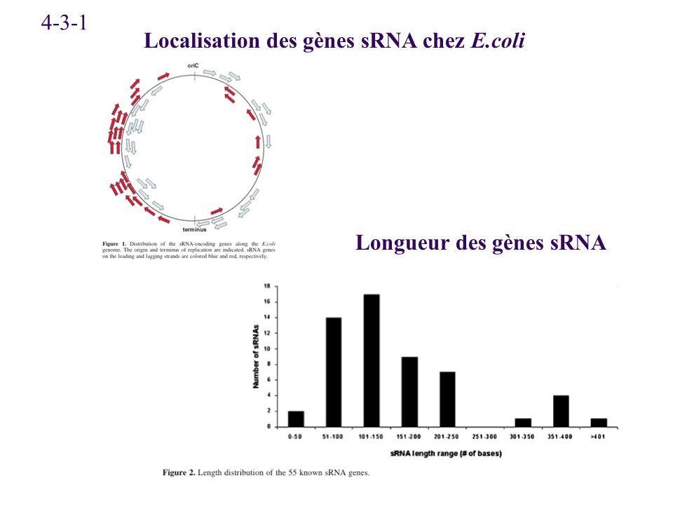 4-3-1 Localisation des gènes sRNA chez E.coli Longueur des gènes sRNA