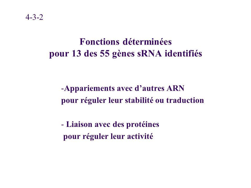 Fonctions déterminées pour 13 des 55 gènes sRNA identifiés