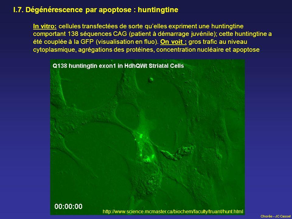 I.7. Dégénérescence par apoptose : huntingtine