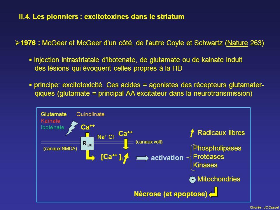 II.4. Les pionniers : excitotoxines dans le striatum